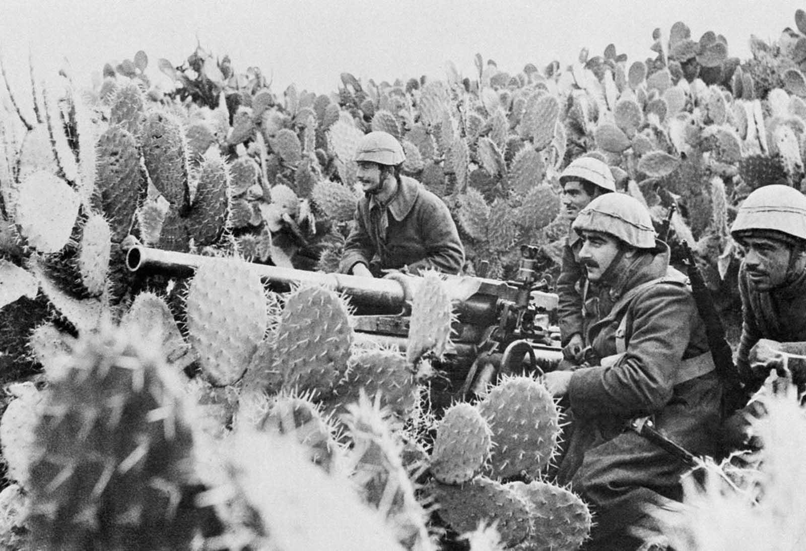 Italian gunners man their light field piece in a field 1943